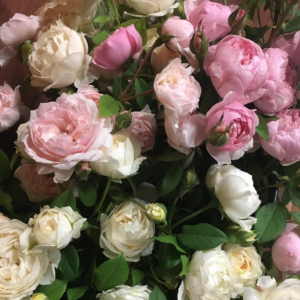 garden roses at Wimbee Creek Farm